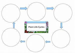 Life Cycle Of A Plant Worksheet By Pantobabe