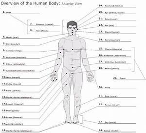Anatomy Basics At Drury University