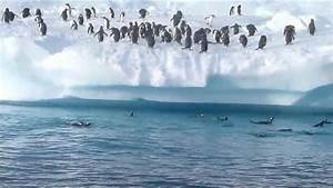 Pingouin Sur La Banquise : pingouins sauteurs youtube ~ Melissatoandfro.com Idées de Décoration
