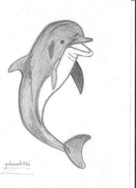 talking dolphin