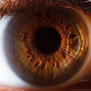 'Your Beautiful Eyes' - Amazing Close-Up Photos Of Human ...