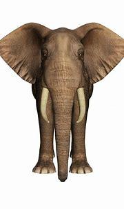 Elephant Free Stock Photo - Public Domain Pictures