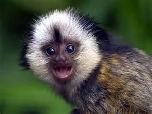 Best Wallpaper: Cute Baby Monkeys