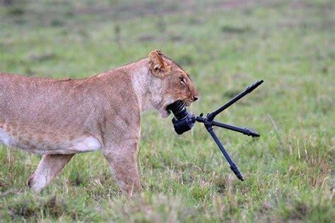 de rencontres entre photographes  animaux