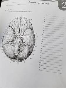 33 Label The Brain Anatomy Diagram Answers