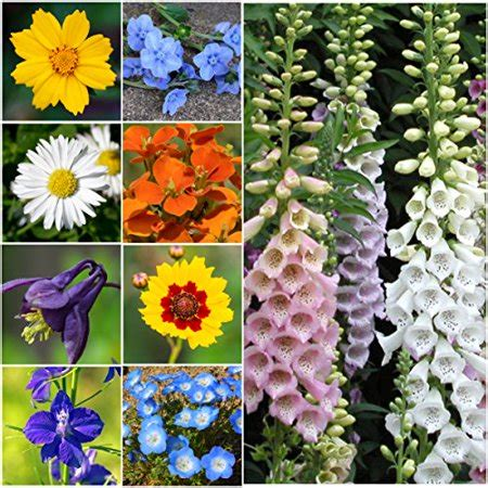 bulk package   seeds partial shade wildflower