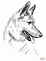 Shepherd German Coloring Printable Dog Pastor Supercoloring Salvo Tatuagem sketch template