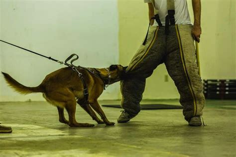 precision  work dog trainers  texas