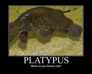 Platypus Meme - evolution joke kappit