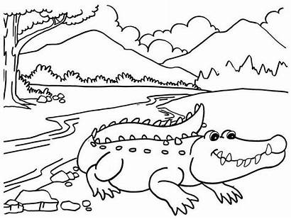 Scenery Coloring Cartoon River Crocodile Mitraland