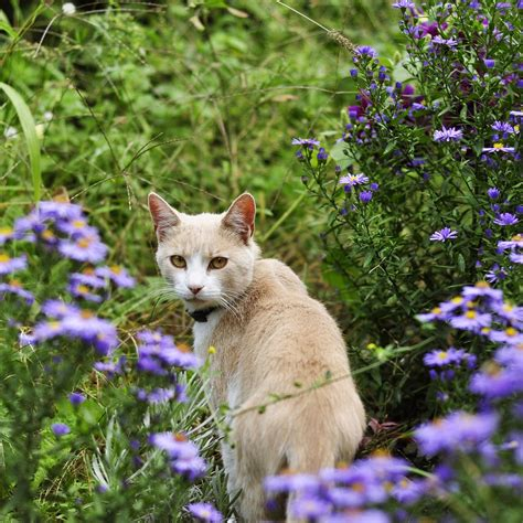 katzen aus garten vertreiben hunde und katzen vertreiben effektive hausmittel zur tierabwehr bei westfalia versand deutschland