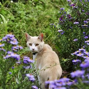 Tiere Vertreiben Ultraschall : katzen vertreiben katzen vertreiben katzevertreiben ~ Articles-book.com Haus und Dekorationen
