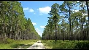 Osceola National Forest In Florida