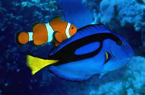Real Life Dory Fish Finding Nemo