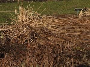 Wann Schneidet Man Gräser : gr serr ckschnitt im fr hjahr winterharte stauden f r lebendige g rten ~ Frokenaadalensverden.com Haus und Dekorationen