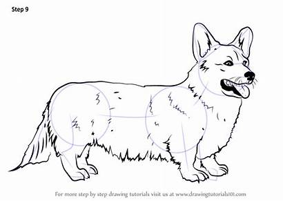 Corgi Draw Welsh Step Drawing Coloring Dogs