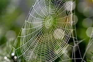 Hausmittel Gegen Spinnen : spinnen bek mpfen wirksame hausmittel helfen ~ Whattoseeinmadrid.com Haus und Dekorationen