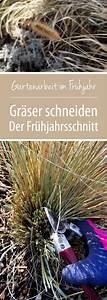 Gräser Zurückschneiden Frühjahr : gr ser schneiden ein fr hjahrsschnitt f r frischen ~ Lizthompson.info Haus und Dekorationen