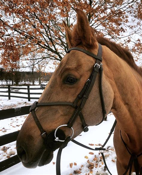 cynical cycle break horse resolutions horses quarter
