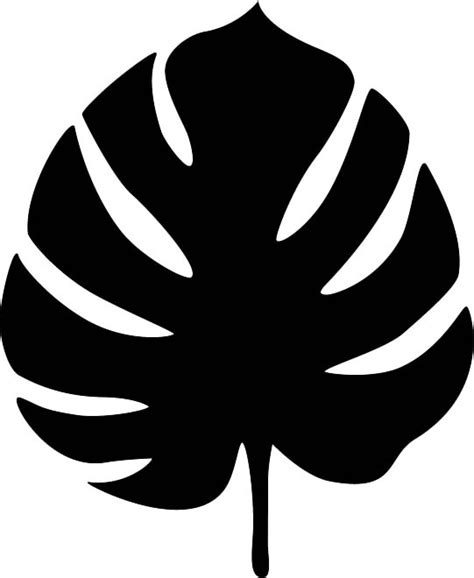 monstera leafjpg  pixels  images