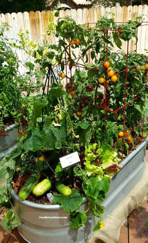 25 trending veggie gardens ideas on garden
