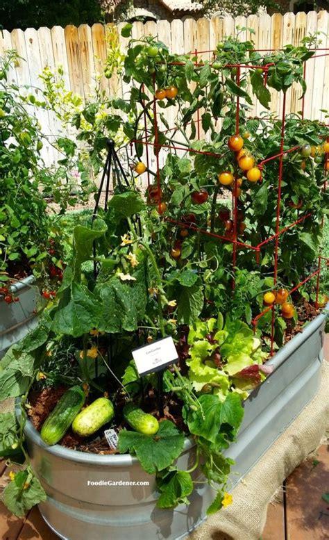 25+ Best Container Vegetable Gardening Ideas On Pinterest