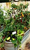 25+ best Container vegetable gardening ideas on Pinterest indoor vegetable garden ideas