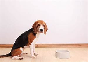 What to do if your dog39s food is recalled american for Akc dog food
