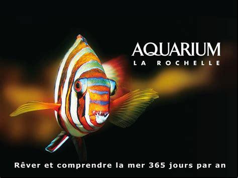 l aquarium de la rochelle tourisme charente maritime s 233 jour royan h 244 tel plage de