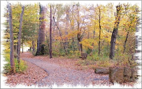 Lanana Creek Trail at The Pineywoods Native Plant Center ...