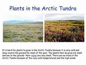 The Artic Tundra