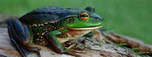 How To Find Frogs In Your Backyard 28 Images How To
