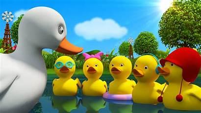 Duck Rhymes Children Ducks Cartoon Five Songs