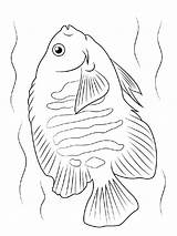 Coloring Angelfish Fish Printable Recommended Getdrawings Drawing sketch template