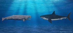The gallery for --> Blue Whale Compared To Megalodon