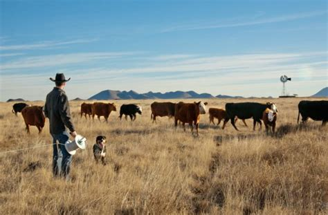 cattle texas ranches manage habitat watershed improve health soil food tank resilience replenish fungi thing cycle around water