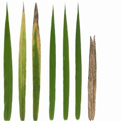 Grass Texture Blade Transparent Single Blades Cycles