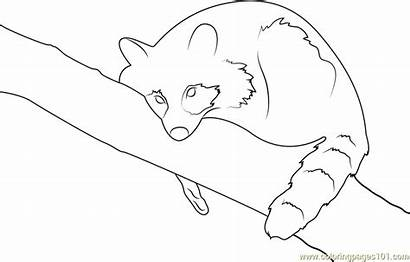 Raccoon Coloring Pages Coloringpages101 Raccoons