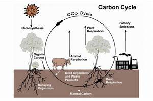 The  Boring  Carbon Cycle