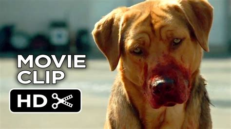 white god  clip dog pack  drama hd youtube