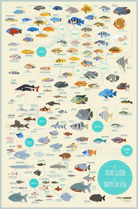 total guide  tropical fish saltwater aquarium fish