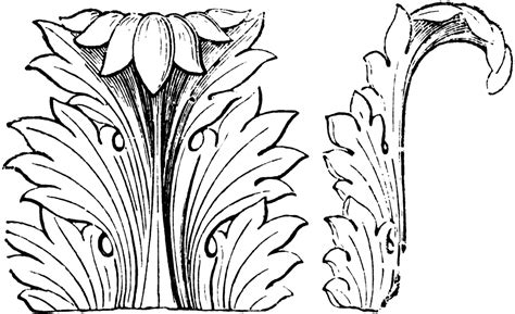 acanthus leaf front  side views clipart