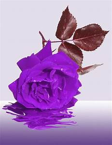photo gratuite deuil fleur memoire condoleances With tapis chambre bébé avec remerciements condoléances fleurs