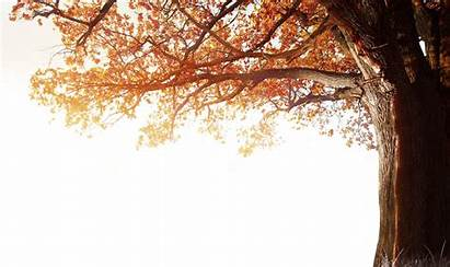 Tree 4k Fall Autumn Winter Clipart Resolution