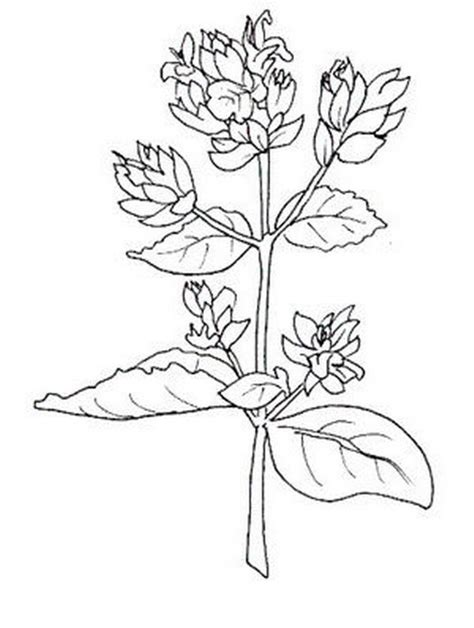 midisegni fiori fiori da colorare disegni gratis