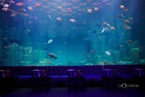 nuit dans un aquarium nuit dans un aquarium 28 images re d 195 169 clairage easyled pour eau douce eclairage led