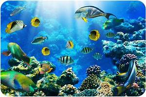 10 Facts About Aquatic Animals Fact File