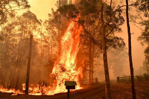 Here's What You Can Do To Help Australian Forest Fires ...