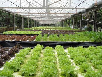 บทความเรื่องที่ 1: การปลูกพืชไร้ดิน hydroponics