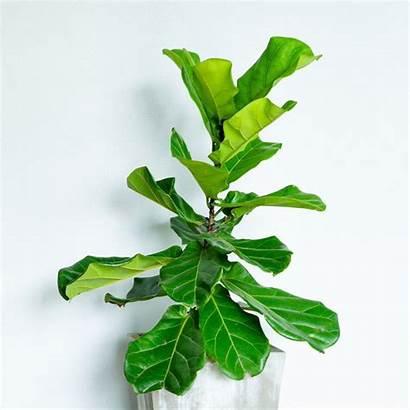 Indoor Plants Plant Names Bathroom Chinese Leaf